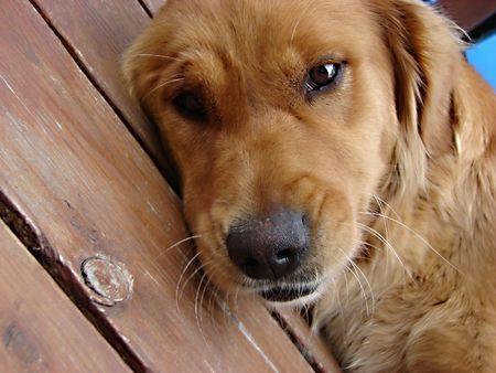 犬の休息とコテージの at ドリーミング 写真素材