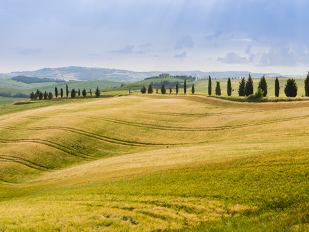 chiantishire: Typical country landscape in the Tuscan hills
