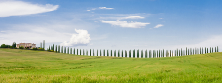 chiantishire: Stunning row of cypresses  in the Tuscan hills