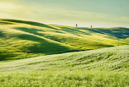 chiantishire: Stunning tuscan landscape, with green grass and rolling hills Stock Photo