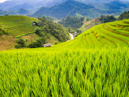 Typical landscape of terraced rice field in the mountains of Mu Cang Chai, Yen Bai Province, northern Vietnam