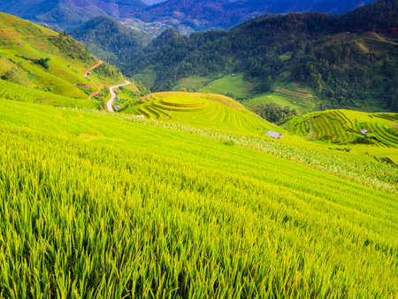 Mu Cang Chai typical landscape with lush terraced rice fields, Yen Bai Province, northern Vietnam