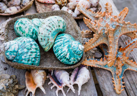 Colorful seashell on a wooden board in a fishing market in Madagascar