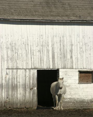 White Horse and Barn