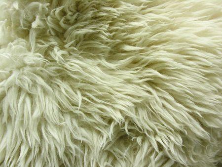 white lamb fur photo
