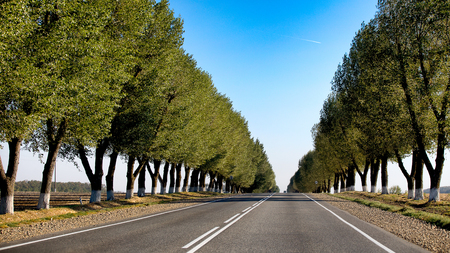 Empty road with green trees planted in a row going forward on a summer day. Moving forward, striving for the better.