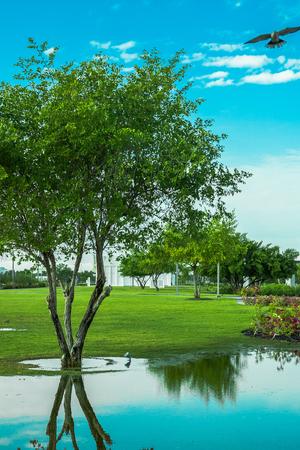 trees in the park Stockfoto