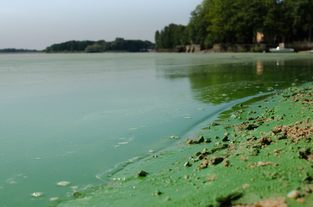 dirty: Dirty, green beach