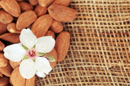 almond tree: fresh almonds useful delicious lying on the sacking background
