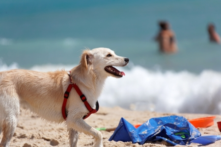Dog Rescue protects the safety of people on the beaches