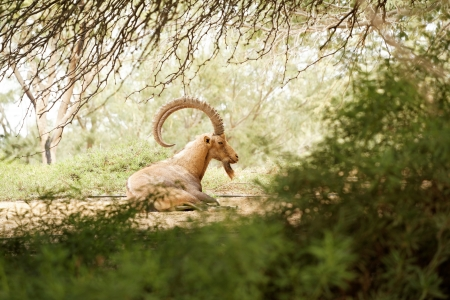 goat in wild untouched nature day photo