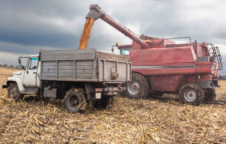 combines: machines for harvesting maize  in autumn