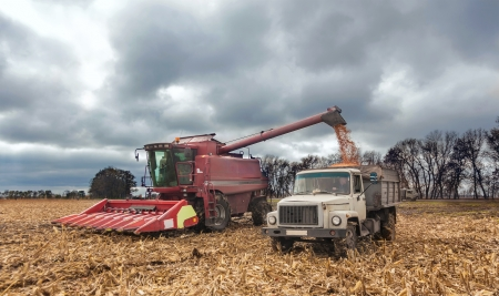 machinery during harvest corn in autumn photo