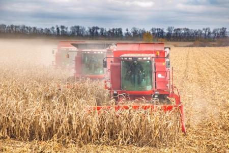combines: combines during harvest corn, autumn
