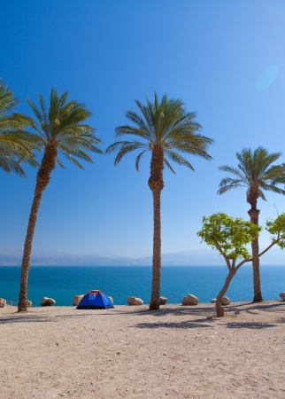 the perfect place for a romantic getaway on the beach under palm trees photo