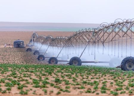 bomba de agua: grandes sistemas de riego cultivables d�as de verano los cultivos Foto de archivo
