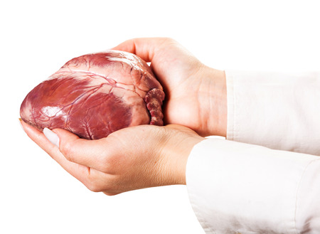hands holding heart, isolated white background photo