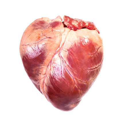 human meat: real heart, isolated white background