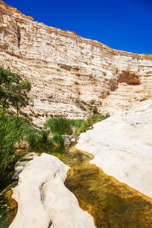 canyon negev: Negev desert canyon landscape with oasis