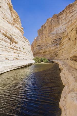source d eau: gorge dans le d�sert du N�guev avec une source d'eau naturelle