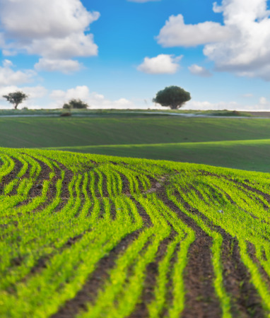 agricultural crops: the rural landscape with ascendant agricultural crops