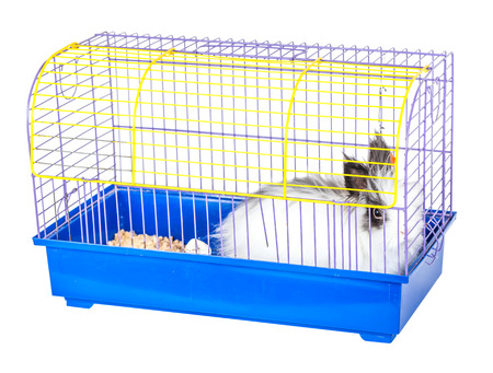 rabbit cage: decorative rabbit in a cage on white background
