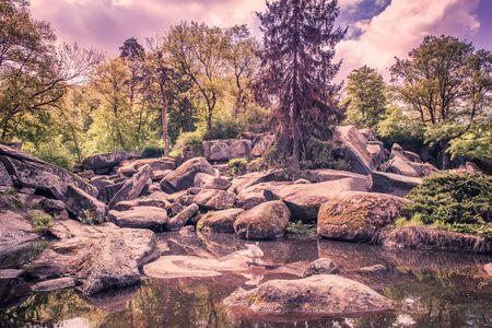 sophia: forest lake with white swan Sophia park