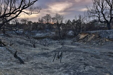 forest wood: evening landscape, land with trees after fire Stock Photo