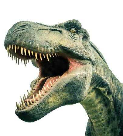 dinosaurio: cabeza de la antigua tiranosaurio dinosaurio en el fondo blanco