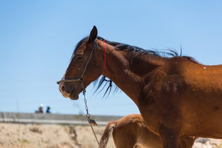 contemporaneous: brown horse with a foal on the farm Stock Photo