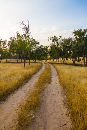 unpaved road: unpaved road in the field, rural landscape Stock Photo