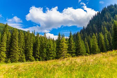 trompo de madera: pinar paisaje de verano en los C�rpatos Foto de archivo
