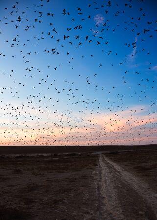birds desert: desert landscape, flying birds against the evening sky