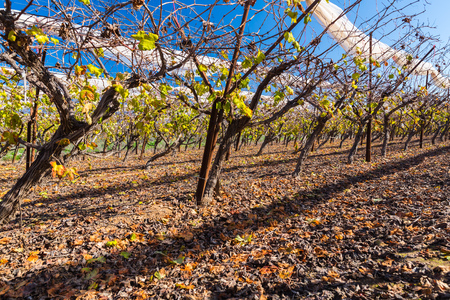 agricultural industry: agricultural industry in the landscape of vineyards