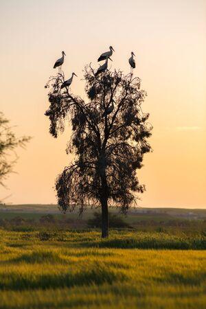 birds desert: desert landscape, birds against the evening sky