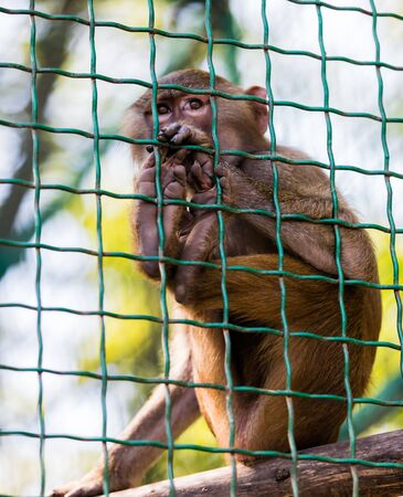 antics: young animal monkey baboon sitting in cage