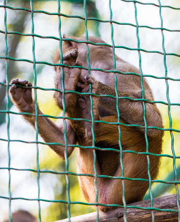 emotionality: young animal monkey baboon sitting in cage