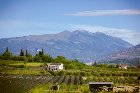 grape field: rural landscape of grape field in the Alps