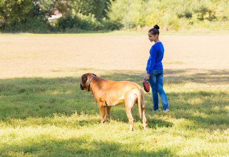 bullmastiff: teen girl walking with the dog breed Bullmastiff in park Stock Photo