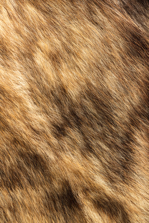furry stuff: the abstract background texture of natural fur wolf Stock Photo