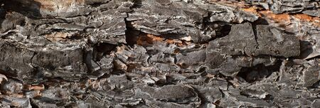 abstract background of pine bark texture closeup