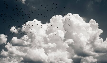 black birds in the sky, background for halloween
