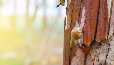 nature background, close-up snail on a tree trunk
