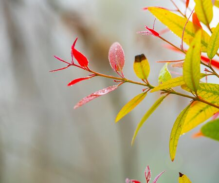nature background, colored autumn leaves on a tree