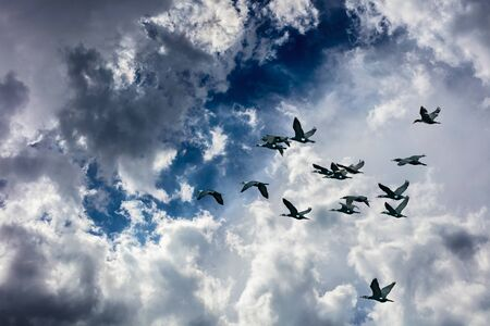 nature landscape, duck birds fly in the blue sky
