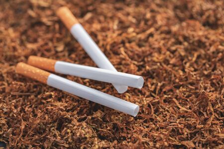 cigarettes close-up on a background of dry tobacco
