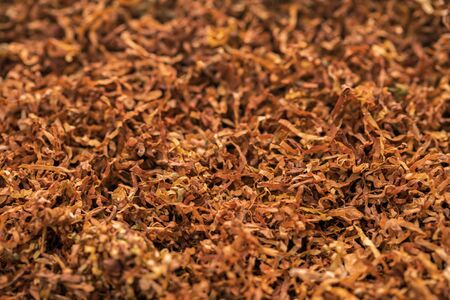 background of dry smoking tobacco texture closeup