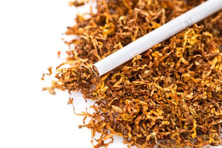 cigarette close-up on a background of dry tobacco