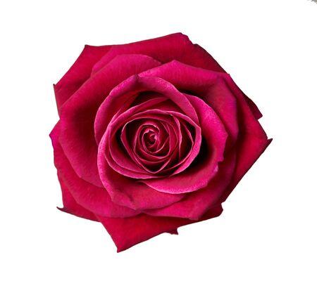 Primer plano de un capullo de rosa sobre un fondo blanco aislado