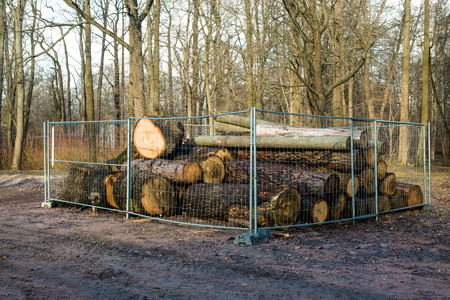 end of the trail: Cut the tree trunk of big spring in the Park cut down old trees to eliminate Stock Photo